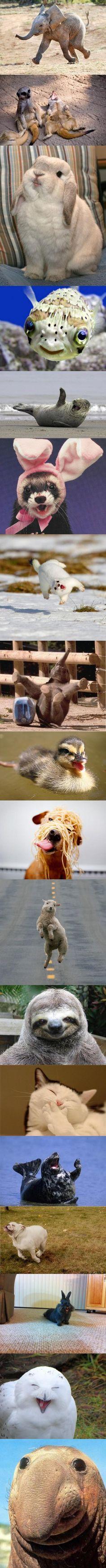 Love happy animals. :-)