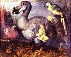 Dodo bird (aka Edward's Dodo) by Roelandt Savery, 1626. One of the most famous paintings of a dodo, it was bequeathed to the British Museum by ornithologist George Edwards—hence it's alternate title. Roelandt Savery is famous for being the most prolific and influential illustrator of the Dodo