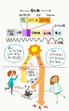 紫外線とUV-A、UV-Bの図解