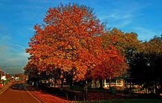 Ich liebe Bäume.  ... Gut, dass ich noch so viele in der Nachbarschaft habe. Also nicht nur im Wald hinterm Haus, sondern auch vorm Haus auf der Straße. Auch wenn sie die Blätter verlieren.  :-)