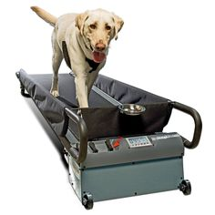 This large size dog treadmill by Dog Tread is perfect for dogs up to 150 Pounds. The long deck and running surface of the large dog treadmill provides ample room for large breeds and multi dog familie