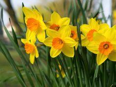 Top Ten Most Beautiful Spring Flowers List Flower Desktop Wallpaper, Spring Wallpaper, Wallpaper Downloads, Most Beautiful, Beautiful Pictures, List Of Flowers, Iphone 7 Wallpapers, Daffodil Flower, Day Lilies