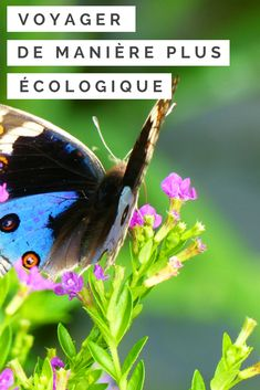 Trucs & astuces pour voyager de manière plus écologique et responsable! #voyage #voyager #ecologie #ecologique #responsable #conscientise #nature #trucsetastuces #trucs #asie #asiedusudest Tips & Tricks, Turkey Travel, Ecology, Fable, Slow, Articles, Pitaya, Nature, Animals