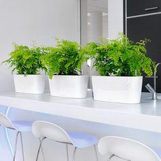 eco-green-office-plants-lechunza-delta-20-51.jpg (550×550)