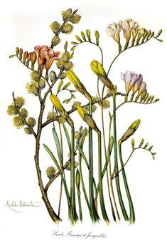 Gallery.ru / Фото #109 - Анатомия растений 1 - lanaluz