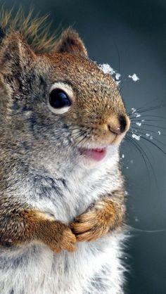 happy, snowy squirrel...