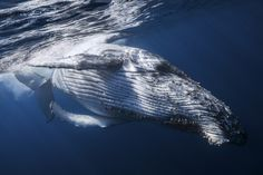Whale Close Up by Gaby Barathieu on 500px