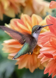 Hummingbird by Elizabeth Ann More