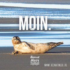 MOIN. >>