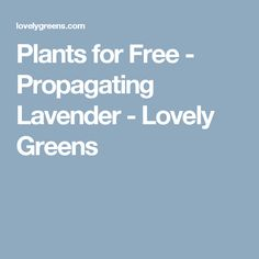 Plants for Free - Propagating Lavender - Lovely Greens