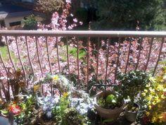 (*) Twitter Balcony Garden, Trees, Gardens, Canada, Victoria, Twitter, Spring, Flowers, Plants