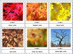 Εικόνες με θέμα το φθινόπωρο για το νηπιαγωγείο
