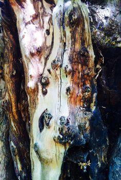 Interesting tree bark. Glyn Overton.