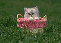 Sweet kitten in basket in grass
