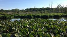 USEPA: Remove the toxic waste from the Everglades of Central Jersey