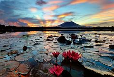 STUNNING SUNSET and LILY-PADS at Sampaloc Lake, The Phillipines Lake Sampaloc is an inactive volcanic maar on the island of Luzon, the Philippines. It is the largest of the Seven Lakes of San Pablo, Laguna. Photo by Niko Lazo We Are The World, Wonders Of The World, Oh The Places You'll Go, Places To Visit, Beautiful World, Beautiful Places, Moonlight Photography, Seen, To Infinity And Beyond