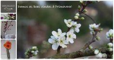 Com a chegada da Primavera a natureza mostra-nos a sua beleza... Criando oportunidades para agradáveis passeios e realização de piqueniques. A Casa Valxisto pode preparar o seu, consulte-nos. Country, Plants, House, Picnics, Nature, Beleza, Home, Spring, Rural Area