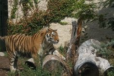 Zoo Boise, Boise: See 329 reviews, articles, and 117 photos of Zoo Boise, ranked No.9 on TripAdvisor among 114 attractions in Boise.