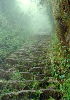 The rain forest portion of the Inca Trail in the Andes