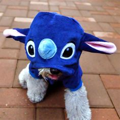 A terrorised terrirer (dog dressed as stitch, lilo and stitch movie)