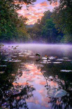 Water Lillies and Mist, Courtois Creek in Missouri, USA