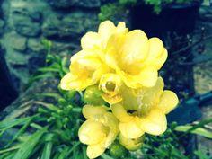 Flower (: