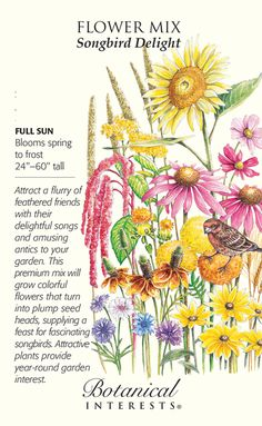 Botanical Interests High Quality Seeds and Garden Products House Plants For Sale, Plants For Sale Online, Planting Bulbs, Planting Flowers, Yellow Flowers, Colorful Flowers, House Plant Delivery, Flower Meanings, Language Of Flowers