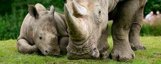 Via Volunteers in South Africa | Rhino Orphanage