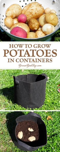 If you don't have the room in your garden to plant potatoes or even if you have no garden at all, you can grow potatoes in containers. Here are some tips for growing potatoes in pots, grow bags, and buckets. #containergarden #container #gardening #growfood #vegetablegarden