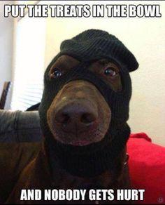 Funny dog meme - http://www.jokideo.com/