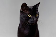 These 10 dogs, cats, and other pets have fortunes that most mere humans can only dream of. National Cat Day, Richest In The World, Three Cats, Cute Cats, Life Is Good, All About Time, Weird, Creatures, Kitty