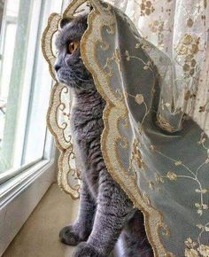 Pretty Cats, Beautiful Cats, Beautiful Bride, Crazy Cat Lady, Crazy Cats, Animals And Pets, Cute Animals, Gatos Cool, Amor Animal
