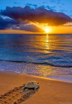 Atardecer asombroso y hermoso en la playa Amazing, beautiful sunset at the beach - All Nature, Amazing Nature, Pretty Pictures, Cool Photos, Beautiful World, Beautiful Places, Beautiful Sunrise, Belle Photo, Beautiful Landscapes