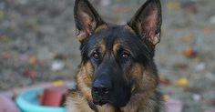 My good boy Argus. http://ift.tt/2g5T2qx