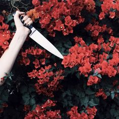 """you really think that just stabbing the flowers is going to stop her?"" ""hey we've done crazier"" ""true"""