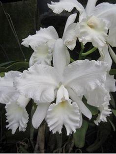 La Orquídea: soberana de las flores. | Cuidar de tus plantas es facilisimo.com