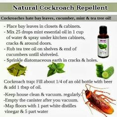 If You Have Roaches You Can Get Rid Of Them Without Using Harmful - How to get rid of cockroaches in kitchen cabinets