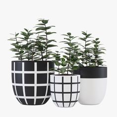 grid pot Model available on Turbo Squid, the world's leading provider of digital models for visualization, films, television, and games. Painted Plant Pots, Painted Flower Pots, Indoor Plant Pots, Potted Plants, Ikebana, Flower Pot Design, Pot Jardin, 3d Modelle, White Planters