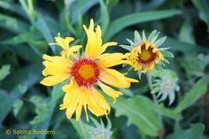 Farbenreiche Flora im Berggarten der Herrenhäuser Gärten