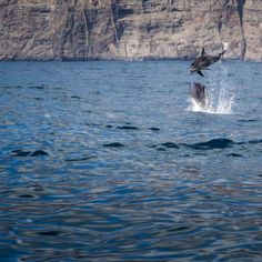 Dolphins and Whales Catamaran Tour