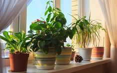 Tucking houseplants into the same indoor container garden? Try indoor plant containers by tucking several houseplants into the same pot. Once choosing an indoor container gardening, you can create varieties of houseplant combos. Easy Care Houseplants, Houseplants Safe For Cats, House Plant Care, House Plants, Ficus, Smart Garden, Best Indoor Plants, Peace Lily, Garden Guide