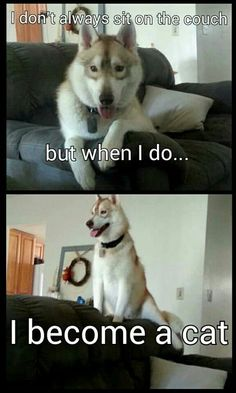 """This exactly what my girls do.  We laugh all the time at them because they look like cats!  We tease and call them """"cat-dog""""."""
