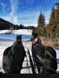 Horses, Mountains, Nature, Photography, Travel, Animals, Photograph, Viajes, Animaux