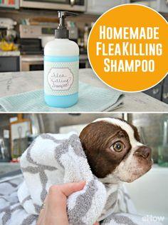 Help your furry family member get rid of fleas with this easy to make, safe homemade flea killing shampoo! DIY here: http://www.ehow.com/way_5455546_homemade-flea-shampoo.html?utm_source=pinterest.com&utm_medium=referral&utm_content=freestyle&utm_campaign=fanpage