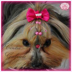 Hairstyle Dog - Model: Yorkshire Nina