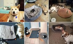 These cats show who's boss in these pictures of them in dog beds