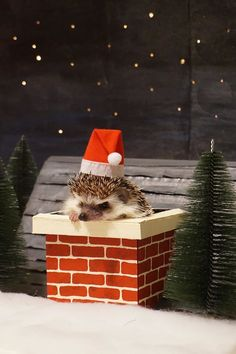 5 Totally Adorable Hedgehogs With Tiny Santa Hats - World's largest collection of cat memes and other animals Hedgehog Care, Happy Hedgehog, Pygmy Hedgehog, Cute Hedgehog, Cute Little Animals, Cute Funny Animals, Homemade Cat Toys, Cute Animal Photos, Christmas Animals