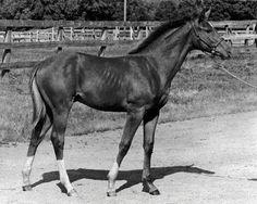 Secretariat as a foal