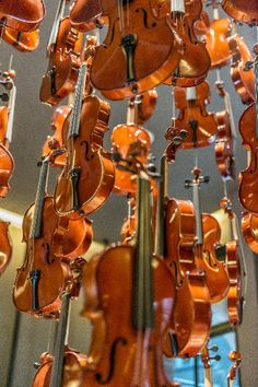 Hanging Violins by Richard Silver, Photograph | Zatista