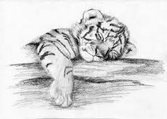 Image result for tiger cub drawing